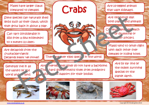 Crab Facts