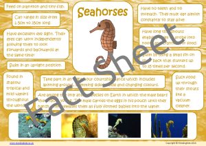 Seahorse Facts