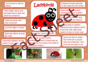 Ladybird Facts