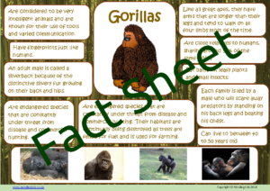 Gorilla Facts